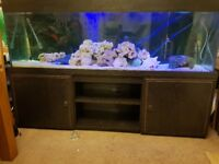 6ft aquarium fish tank