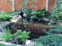 Complete Pond