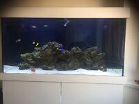 marine aquarium/tank