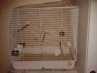 2 6 year old budgies, with cage and everything needed to get you started