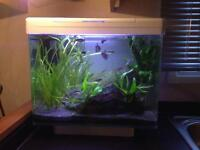 30 litre Coldwater Aquarium