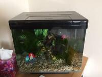 40L fish tank with ALL equipment and accessories