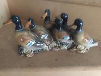 China ducks