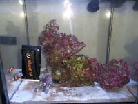 Real Reef Rock (2.6Kg).