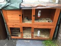 Rabbit Hutch with 2 female Rabbits