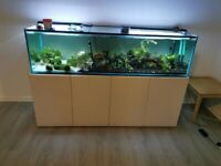 6ft fish tank and unit for sale