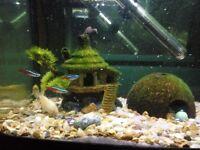 Acquarium with heater, pump and fish