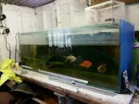 4 foot fish tanks fish house