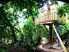 TREE HOUSE, Devon. Genuine tree house in oak tree, luxury self catering holiday accommodation for 2. Honiton