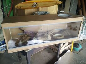 Full vivarium set up - 4 foot viv + automatic heating and lighting equipment and obstacles