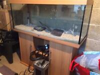 Rio 240 in Beech with External Filter