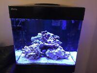 Red Sea max 130 marine reef fish tank
