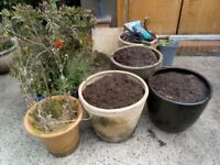 Used Pots of all sizes, shapes, types, material needs new homes