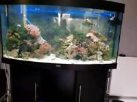 4ft 260 litres jewel bow fronted fish tank,stand. Filter