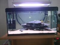 arcadia 96w t5 2 foot aquarium light