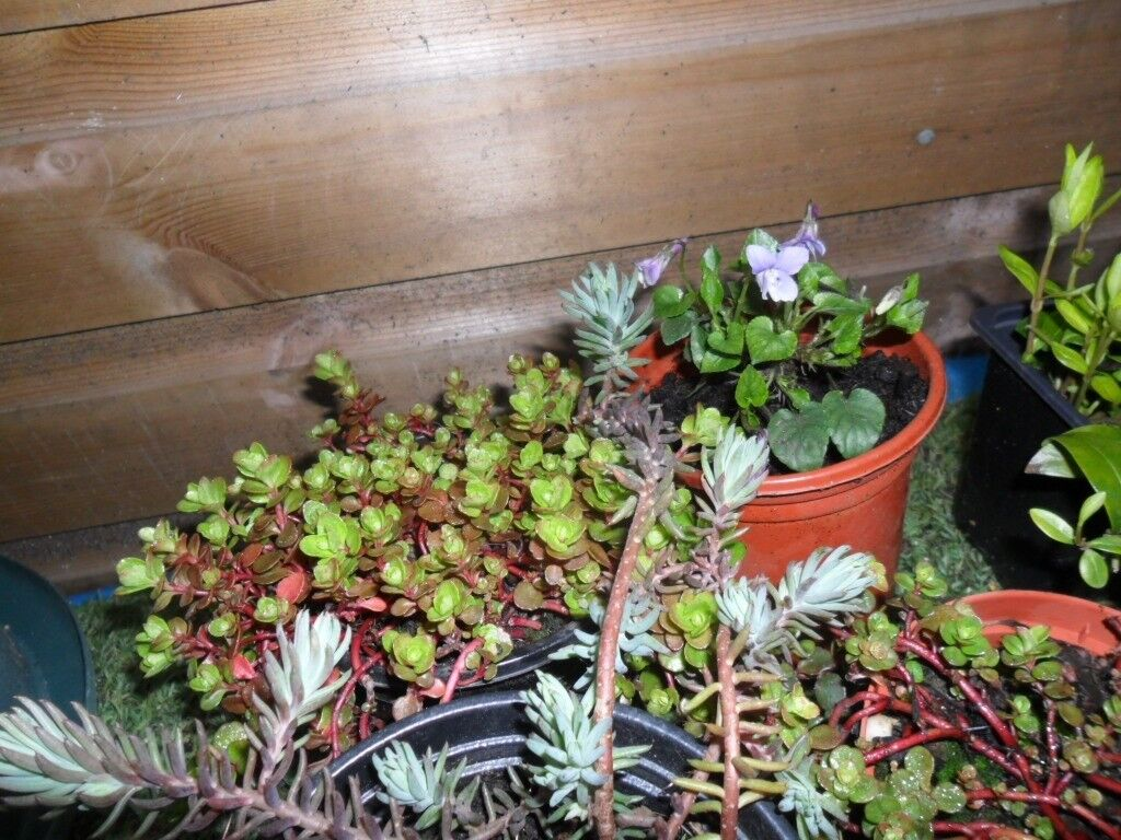 Various Alpines Shrubs Flowering Perennials Climbing Plants