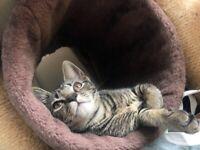 🐱Beautiful cute Sandy Kittens! Ready Now!