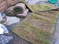 Free turf /lawn available now 5m^2 take as much needed