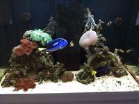 Marine aquarium live stock for sale