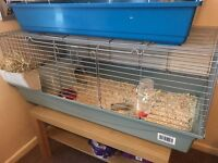 Young guinea pig and large cage