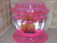Pink and clear fish tank with filter