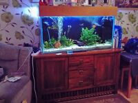 4ft Fish tank with 5ft solid oak side unit and fish and accessories