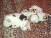 Colourful kittens ready for new homes now