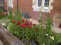 Plantswoman/Gardener/Designer