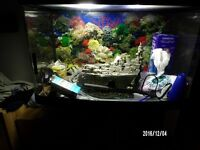 fish tank with cabinet with accessory