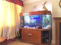 Internal Fish Tank