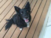 Dog walker (Islington, Angel, Pentonville, Saint Pancras, King Cross)
