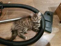 Kittens Need New Loving Home