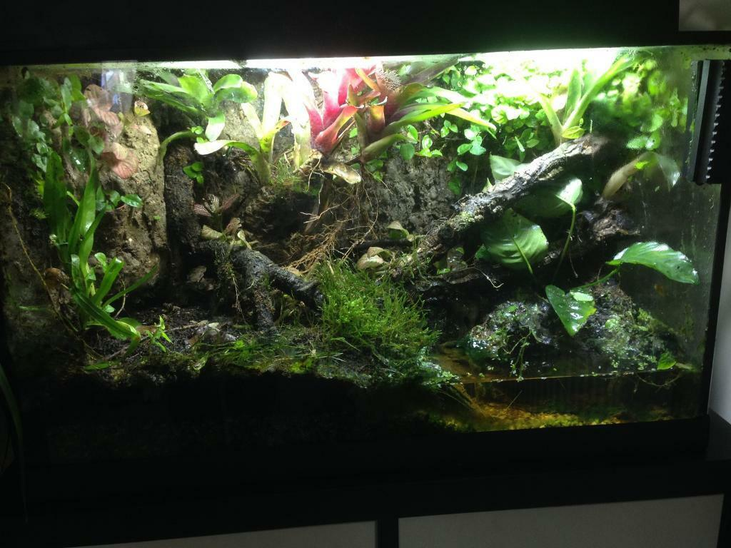 Stunning live planted with waterfall vivarium terrarium for Aquarium waterfall decoration
