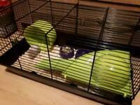 female dwalf hamsters