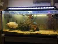 3ft fish tank with black cabinet