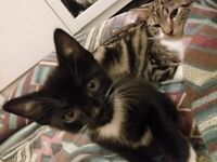 Missing cats Both missing on same day
