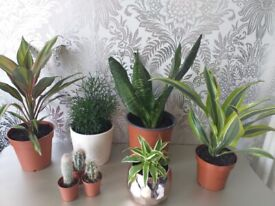 Collection of indoor plants