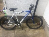 2 Adult bikes for sale