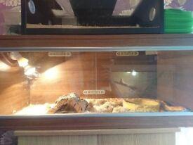 Corn snakes and vivarium, leopard geckos