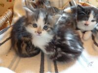 Kittens for re-homing