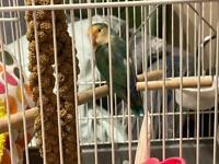 !!Chickadee Reunited!! !!Safe And Sound!!