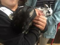 Cute very tame young rabbits