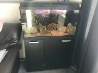120 litre fish tank