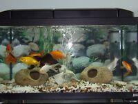 set up fish tank