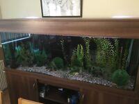 6' Fish Tank