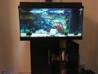 Juwel Fish Aquarium & Cabinet