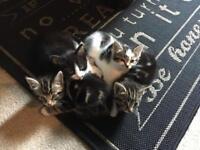 Gorgeous Kittens 🐱