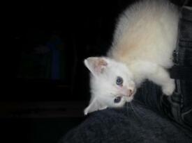 stunning kitten