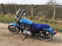 Stunning Harley Davidson 883 superlow
