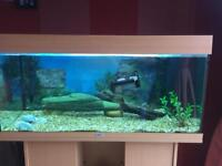 Fish tank with lights , heater, filter & cabinet
